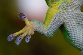 Geckos, spiders, and SOD-1 – Van Der Waals Force
